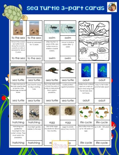 sea-turtle-3-part-cards-PDF