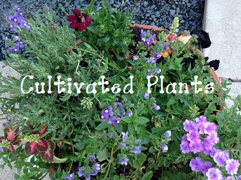 cultivated-plants-and-flowers