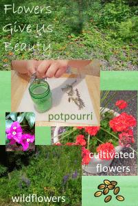 flowers-give-beauty