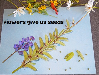 flowers-give-us-seeds