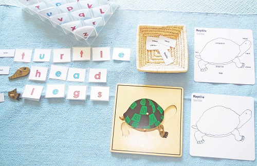 turtle-words-movable-alphabet
