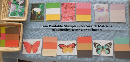 multiple-color-swatches-matching-butterflies-and-flowers-activity