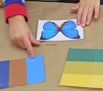 which colors match the butterfly of two samples