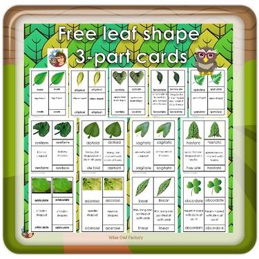 botany-leaf-shape-3-part-cards