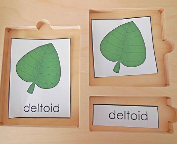 deltoid-shape-botany-3-part-cards