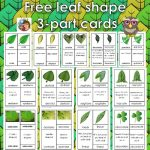 Leaves Shapes Botany 3-part Cards Free PDF