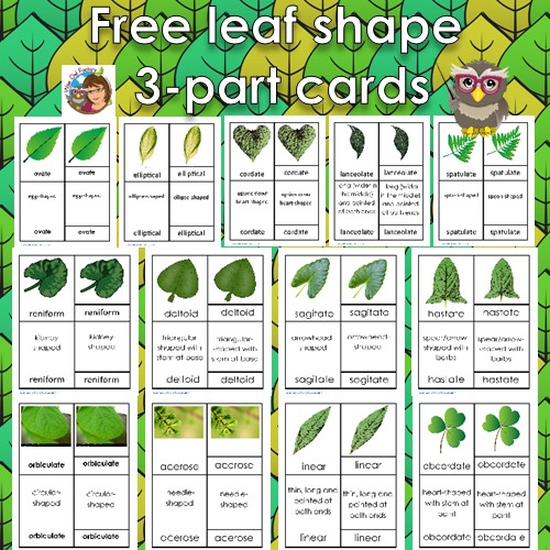 leaf-shape-3-part-cards-free-from-Wise-Owl-Factory