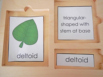 leaf-shape-3-part-cards-with-words