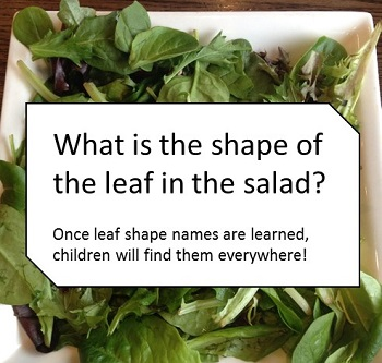 leaf-shapes-in-salad-what-are-they