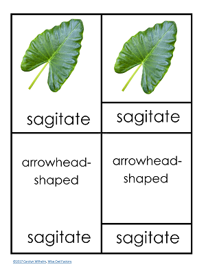 sample-page-from-leaf-shape-botany-PDF