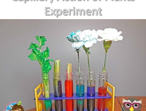 Capillary Action of Plants is Revealed by Food Coloring Experiment