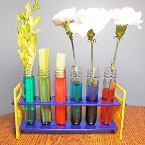 carnations-and-celery-in-water-with-food-coloring
