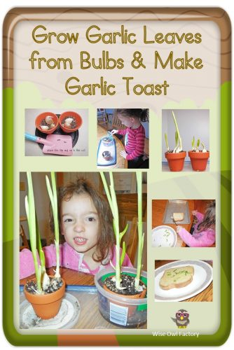 How to Easily Grow Garlic to Spice Bread at Home and a free printable for children to measure and record plant growth.