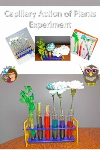science-experiment-capillary-action-of-plants-and-flowers