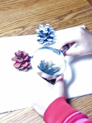 taking-a-look-at-pine-cones-we-painted