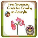 Amaryllis Plants for Fun Measurement Project