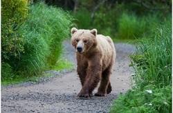 bear-theme-premium-eMember