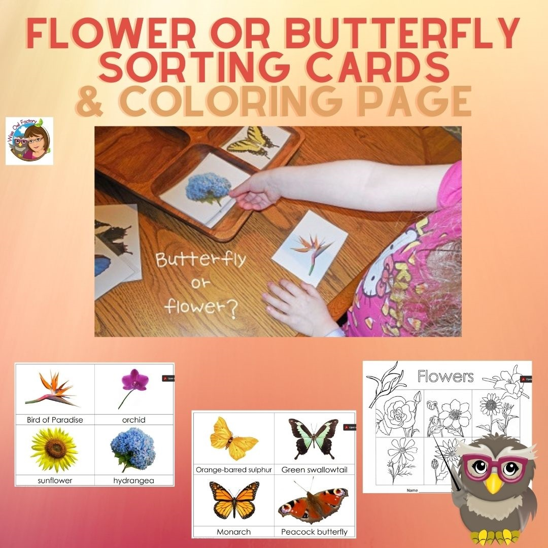 flower-or-butterfly-sorting-cards-and-color-pgs