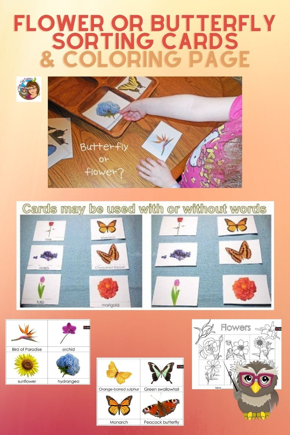 Flower or Butterfly Sorting and Coloring Free PDF Engage a young learner who might mix up flowers with butterflies. Both are so beautiful!