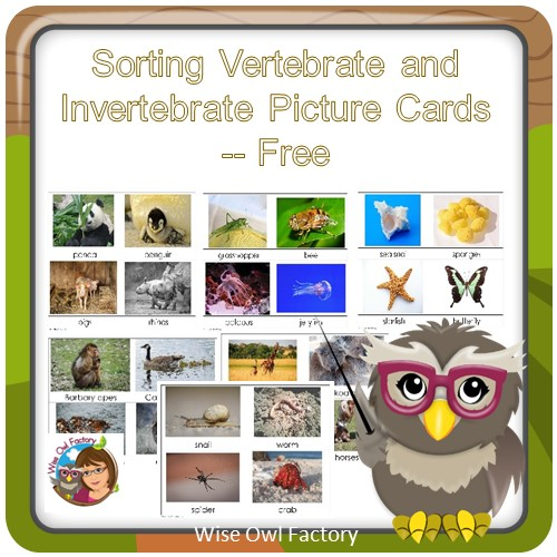 Invertebrates and Vertebrates Card Sort Free PDF