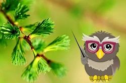 premium-eMember-owl-class-theme