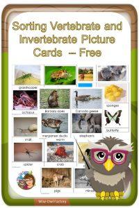 sorting-pictures-invertebrates-and-vertebrates