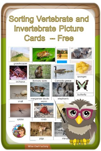 Invertebrates and Vertebrates Card Sort Free PDF -- Pre-K and primary grades and could be used in a science center.