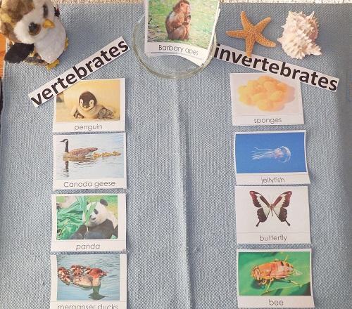 sorting-vertebrates-invertebrates