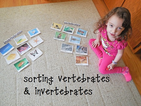 zoology-sorting-invertebrates-vertebrates