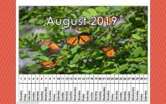 2019-linear-calendar-freebie