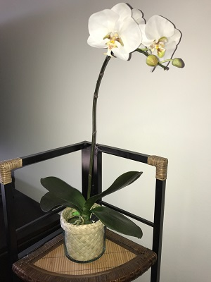 Orchid-at-its-new-home