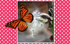 butterfly-life-cycle-3-part-cards-Monarch