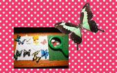 Butterfly Matching Montessori Inspired Free PDF