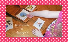 Butterfly or Flower Sorting and Coloring Free PDF