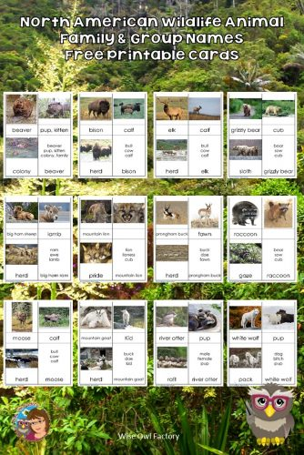 North American Wildlife Names Cards Free PDF --  --animal family names (buck, doe, fawn) and group names (such as herd). And giveaway!