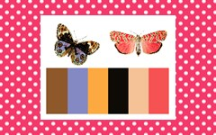 Color Palettes for Flowers and Butterflies Matching