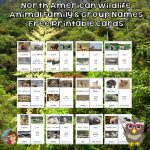 North American Wildlife Names Cards Free PDF