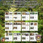North American Wildlife Names Cards Free PDF