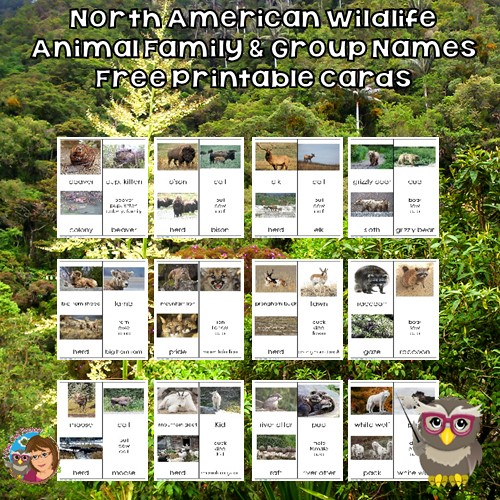 North American Wildlife Animals Family and Group Names Free PDF