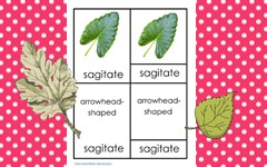 leaf-shapes-botany-3-part-cards