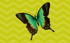 Free Monarch Butterfly 3-part cards