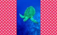 Sea Turtle 3-part Montessori Cards Free