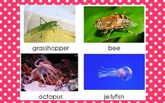 vertebrate-or-invertebrates-PDF