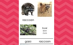 Wildlife Animal & Group Names