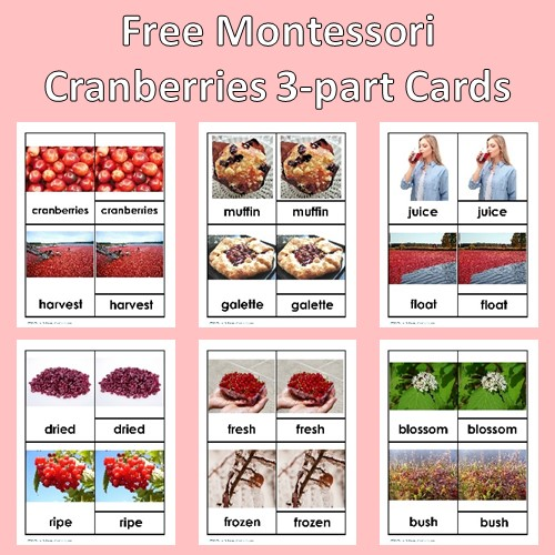 free-cranberries-3-part-cards-printable