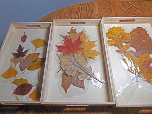 sorting-laminated-leaves-small-medium-large (3)