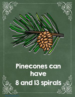 pine cones show Fibonacci numbers