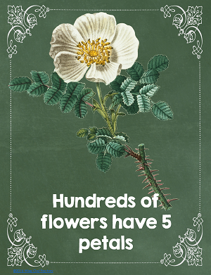 many-flowers-have-5-petals