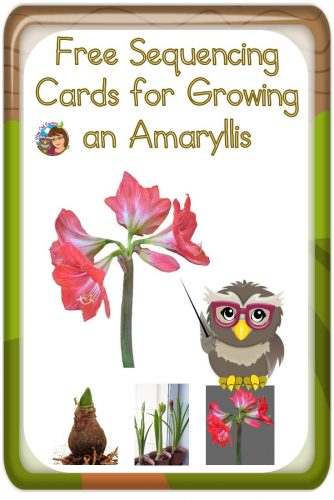 Amaryllis Plants for Fun Measurement Project free PDF for measuring  and sequencing plant growth