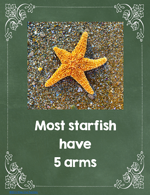 starfish-have-5-arms-in-most-cases